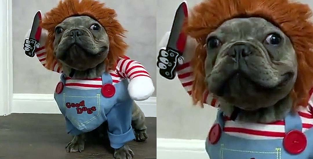 Divertido disfraz de Chucky para tu perro. 3