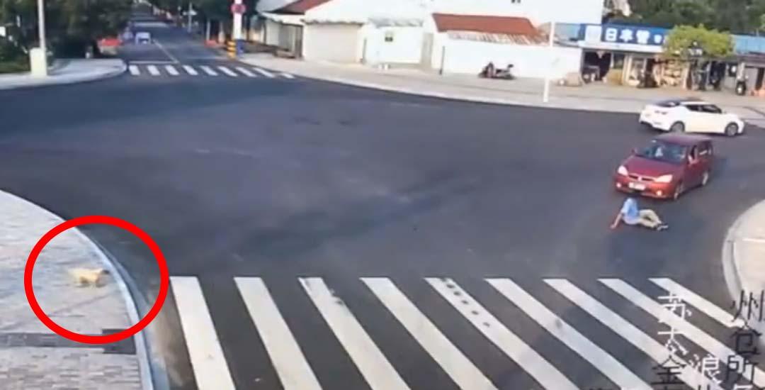 Sorprendente vídeo de como una persona cruza la carretera y como lo hace un perro. 6