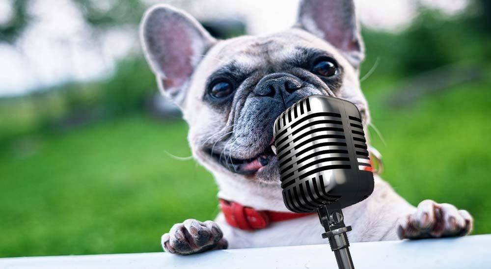 Este perro canta la canción Roxanne de The Police [Vídeo] 4