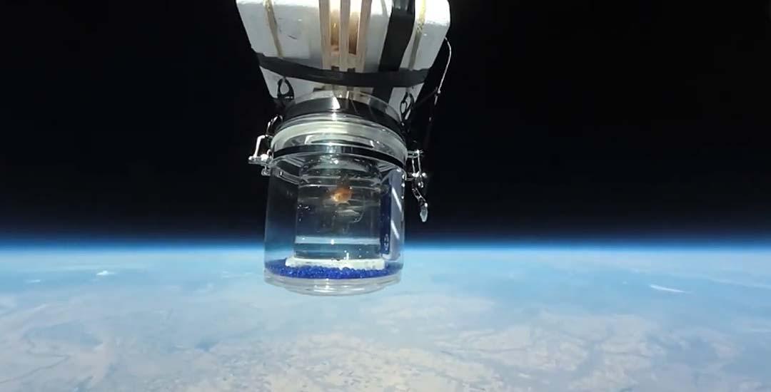 Envían un pez al espacio en un globo meteorológico 19