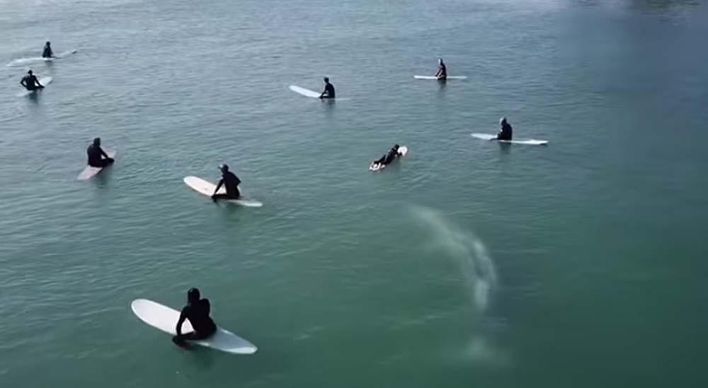 Vídeo de una ballena gris nadando bajo los surfistas 7