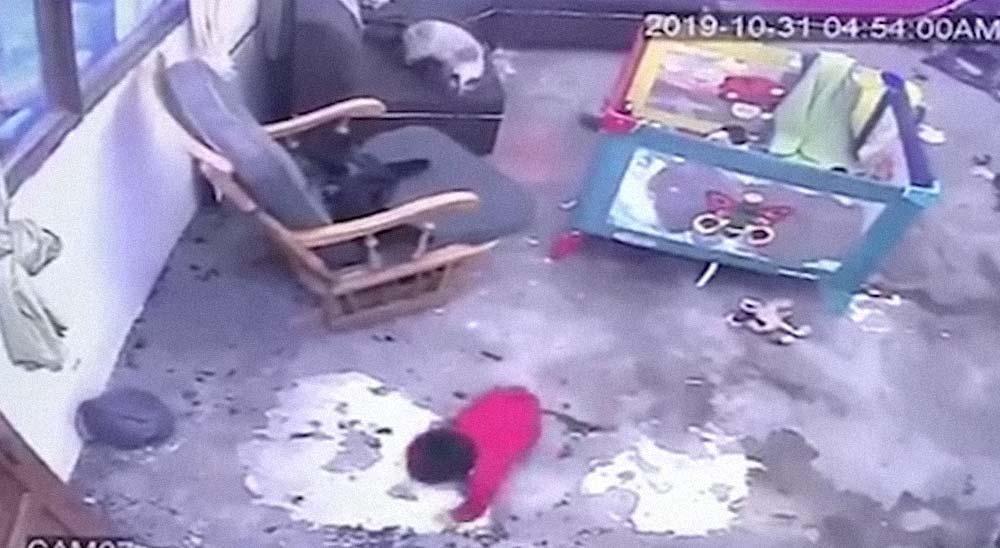 Gato salva a un niño de caer por las escaleras [Vídeo] 1