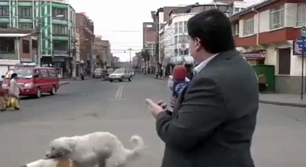 Vídeo del reportero interrumpido por dos perros muy amorosos 1