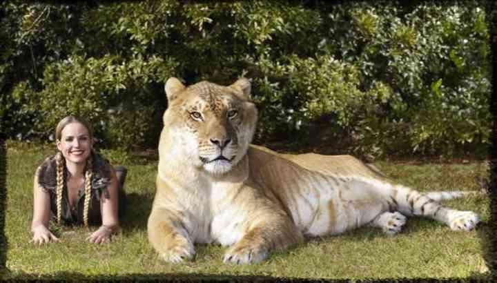 10 de los animales más grandes del mundo según el libro guinness de los récords 4