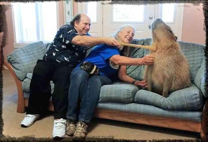 10 de los animales más grandes del mundo según el libro guinness de los récords 2