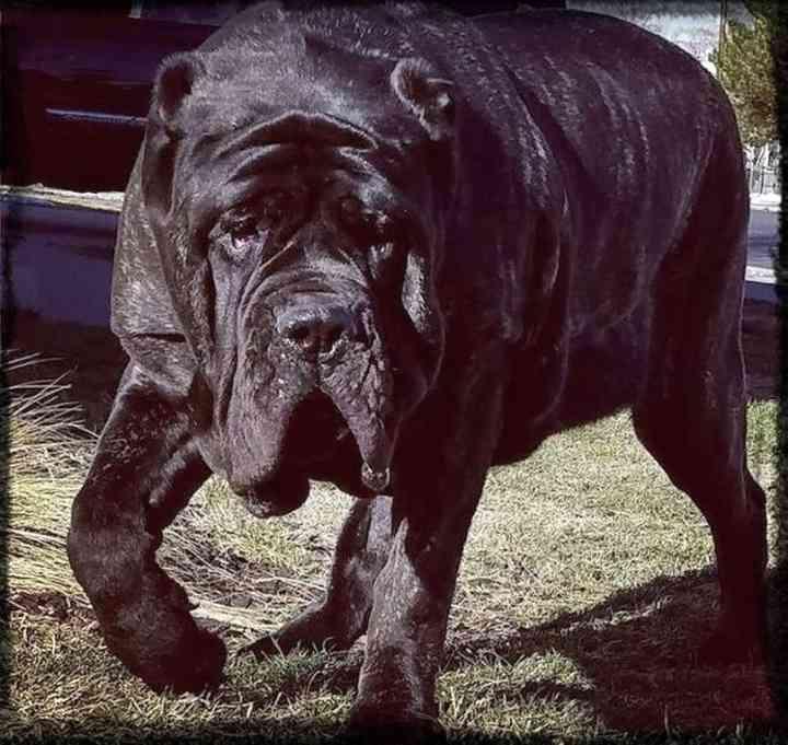 10 de los animales más grandes del mundo según el libro guinness de los récords 12