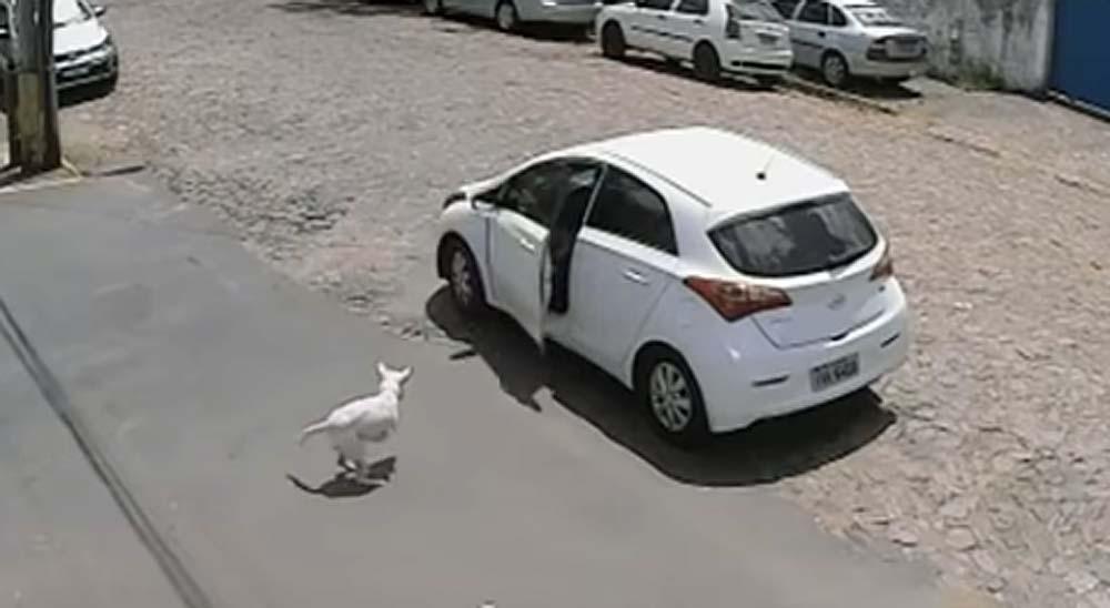 Una mujer abandona a su perro discapacitado 2