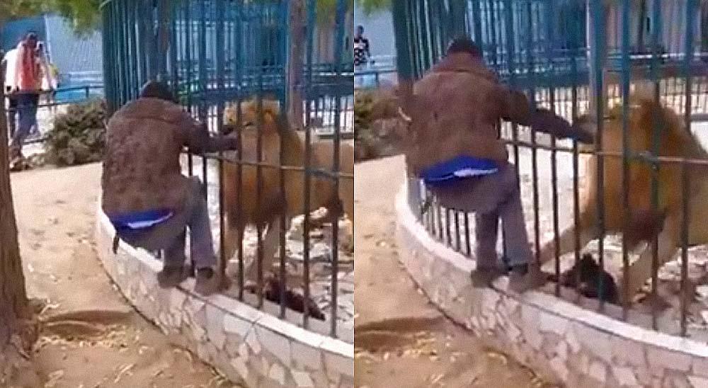 Se acerca demasiado a la jaula de un León y casi pierde el brazo 7