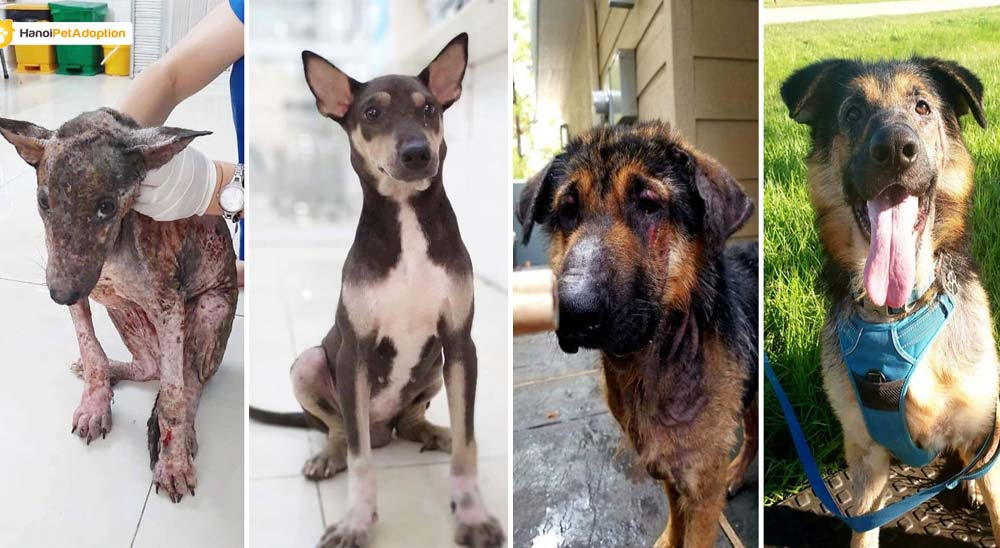 10 Perros abandonados que han encontrado una nueva vida 22