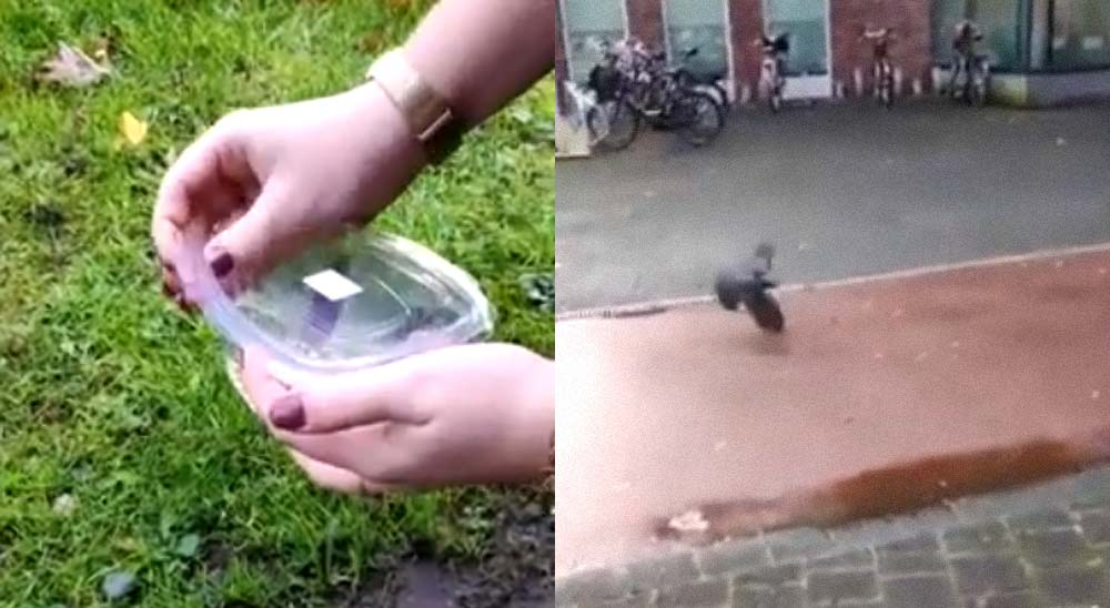 La liberación de un pequeño ratón no sale nada bien 15