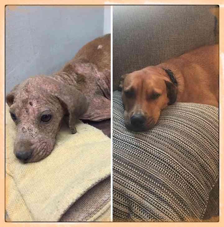 10 Perros abandonados que han encontrado una nueva vida 4