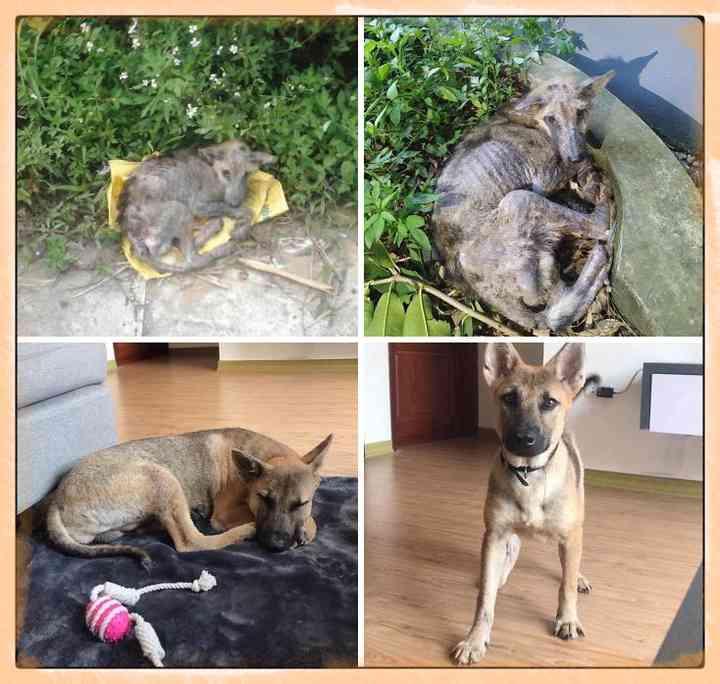 10 Perros abandonados que han encontrado una nueva vida 7