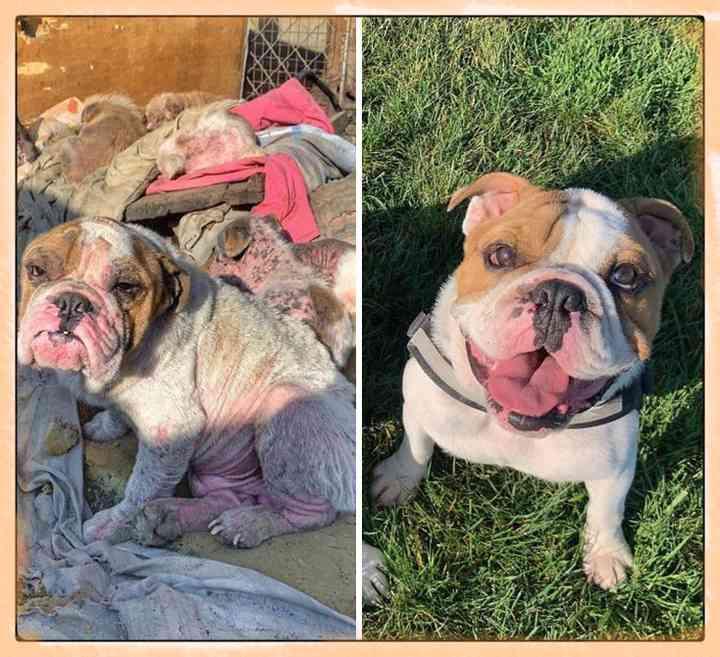 10 Perros abandonados que han encontrado una nueva vida 8