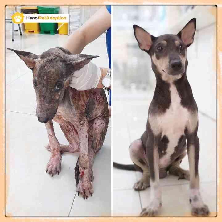 10 Perros abandonados que han encontrado una nueva vida 10