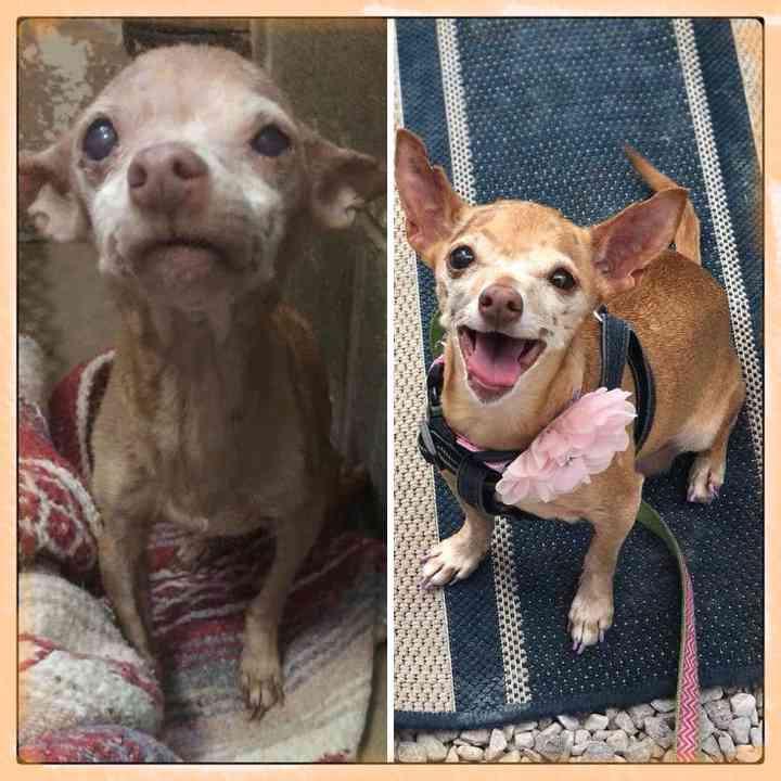 10 Perros abandonados que han encontrado una nueva vida 11