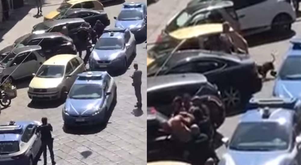 Policías matan a tiros a un pitbull al ir a detener a su dueño 7