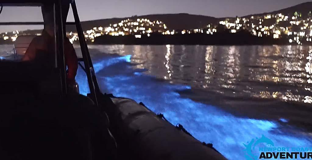 Delfines brillantes grabados en Newport Beach, California 2