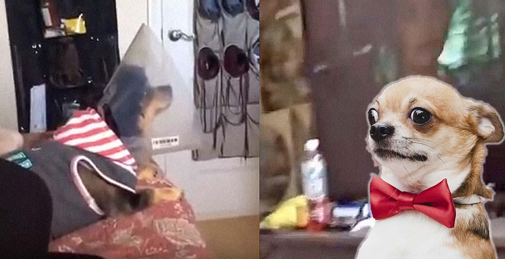 Divertido vídeo de un perro viendo una película de terror 7