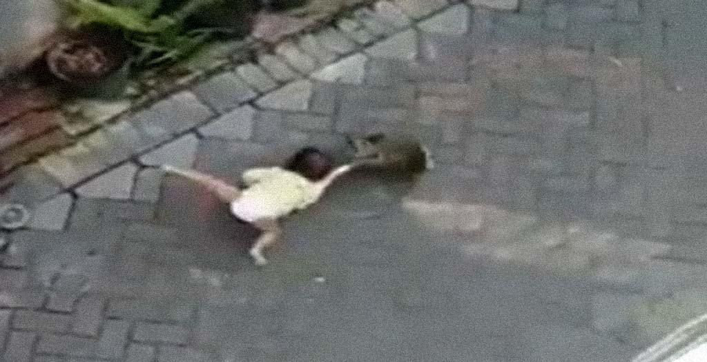 Un mono montado en una mini moto, intenta secuestrar a una niña 7