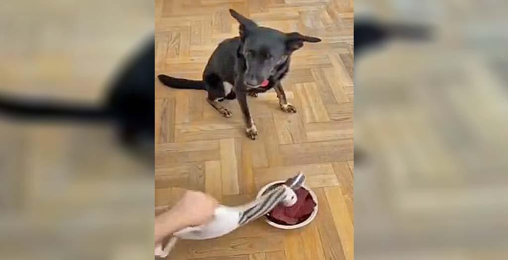 Divertida reacción de un perro que esta comiendo 1