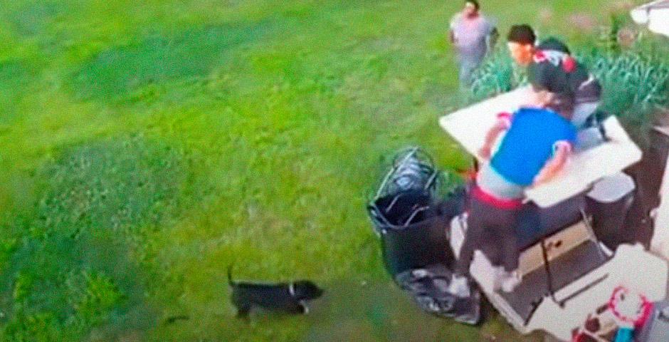 Escapando de un perro suelto 2
