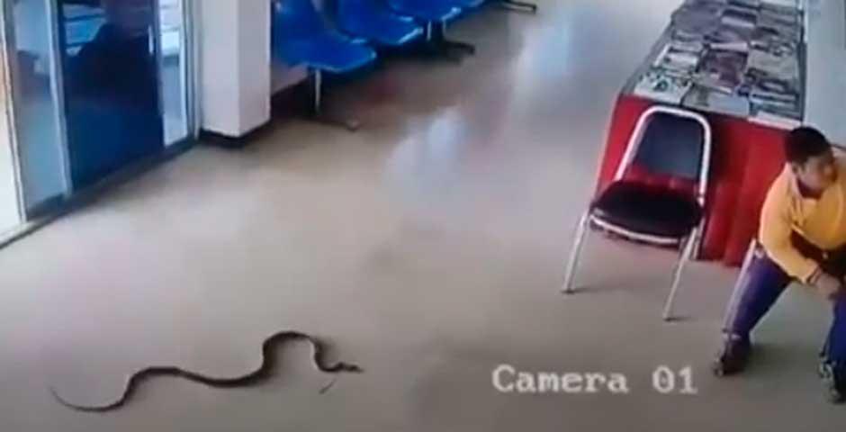 Serpiente se cuela en una tienda y ataca a un hombre 19