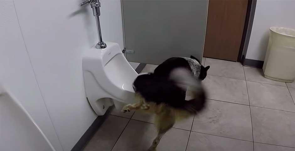 Lo que hace este perro te va a dejar con la boca abierta 2