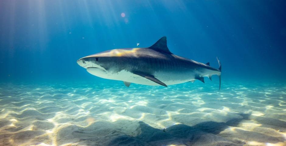 Niña de 6 años se encuentra cara a cara con un tiburón en la playa 9
