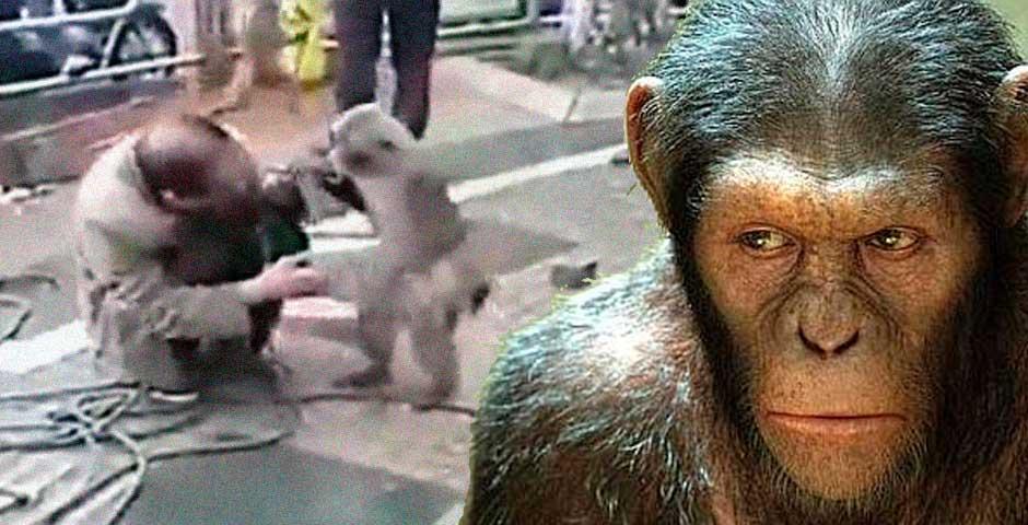 La reacción de estos monos te va a poner los pelos de punta 2
