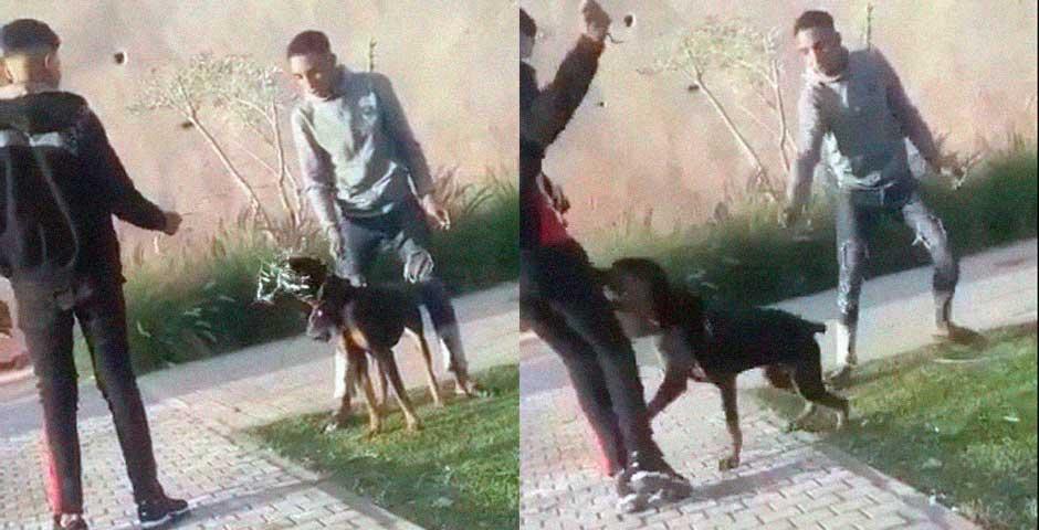 Toca las narices a un perro y pasa una desgracia 7