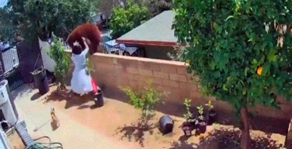 Mujer se lía a tortazos con un Oso que intenta entrar en su casa 2