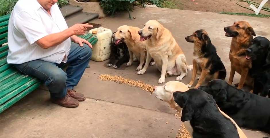 ¿Todavía no has visto el vídeo de los perros que rezan antes de comer? 3
