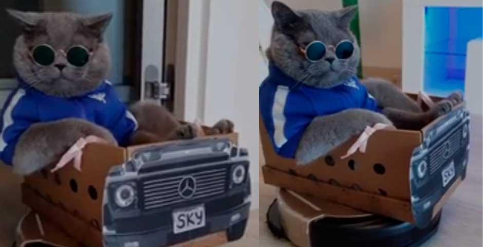 Si tienes una roomba, un gato y tiempo libre, esto te va a gustar 2