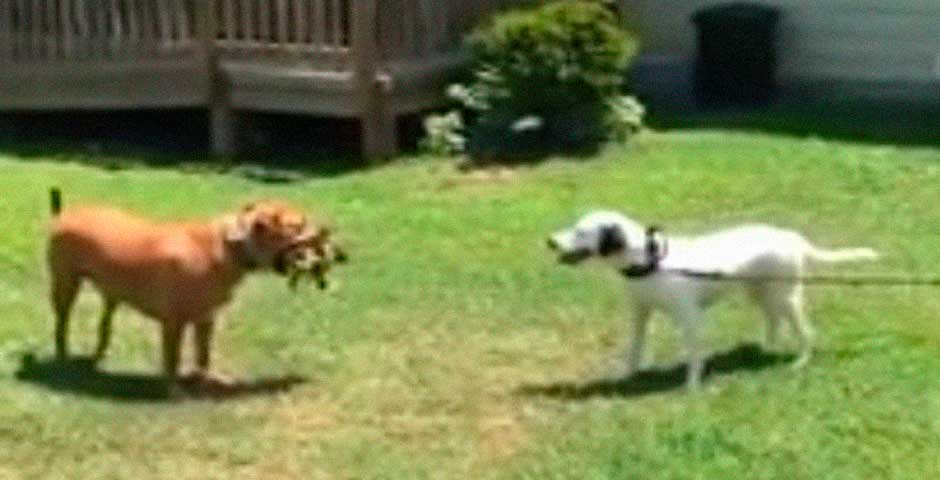 Lo que hace este perro te va a romper el corazón 10