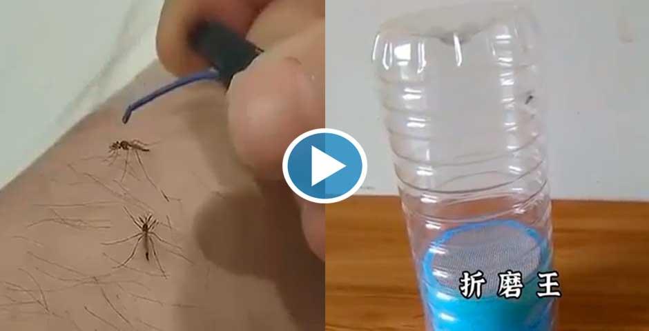 Maneras Chinas de matar mosquitos 8